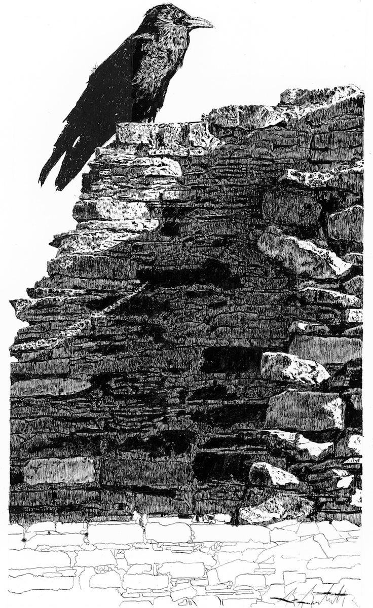 Chaco Raven